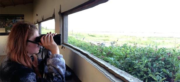bird-watching-in-the-RSPB-snettisham-beach-bird-reserve